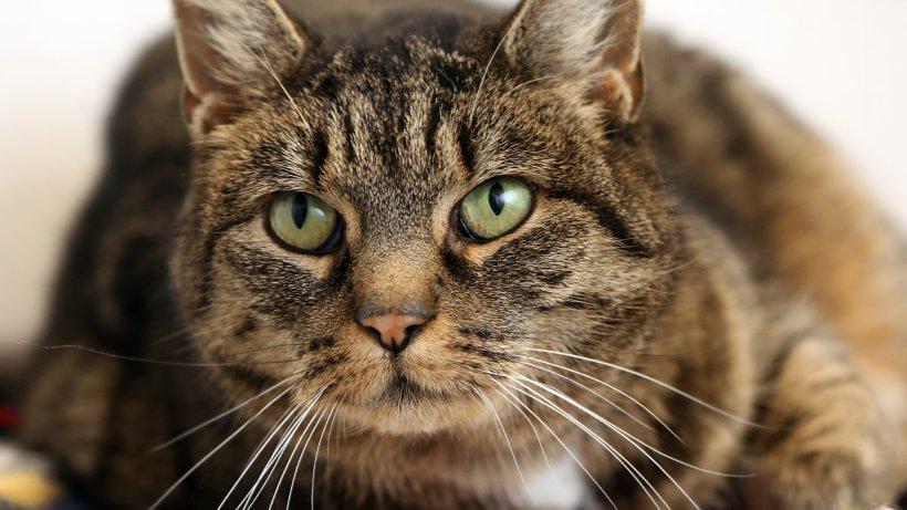 Ginger wartet im Tierheim Peine auf neue Besitzer - Peiner Nachrichten